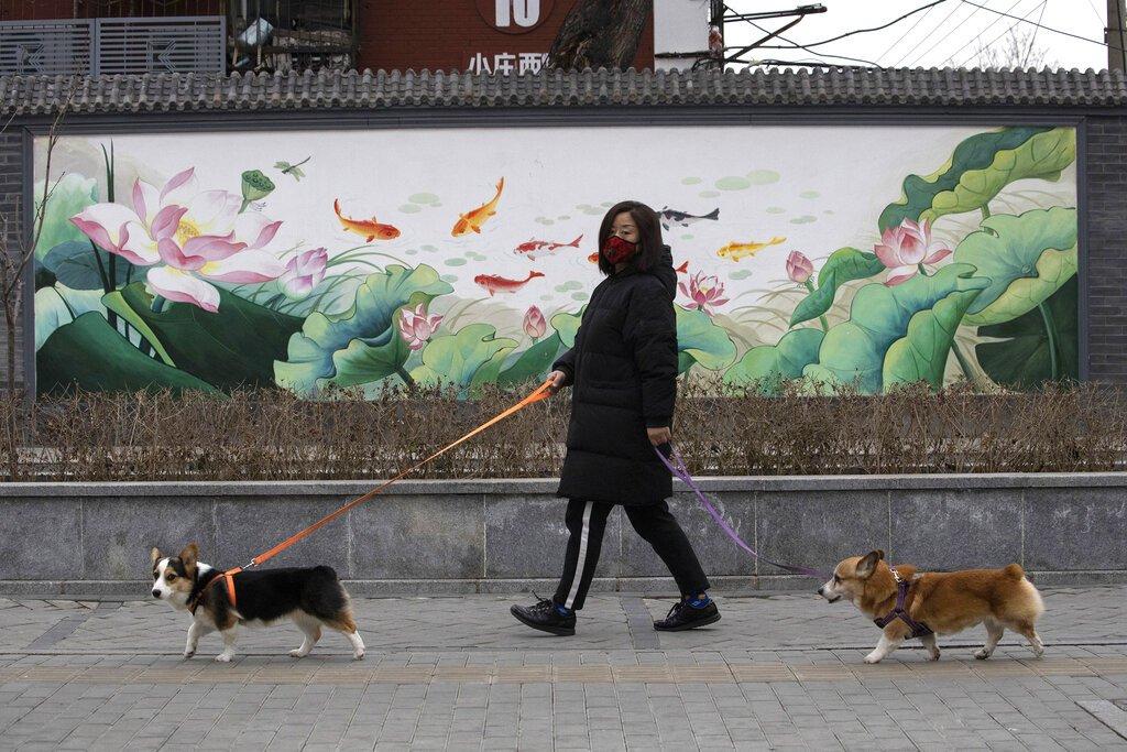 Una mujer protegida con una mascarilla, pasea a sus perros en Beijing, China. Foto: Ng Han Guan / AP / Archivo.