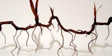Rizoma (Fragmento). Foto: Cristina Almodóvar.