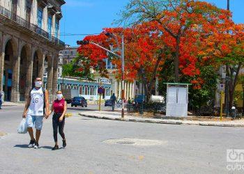 Los nuevos casos corresponden a La Habana y Mayabeque, y a los municipios de Cotorro y San José de las Lajas, respectivamente.Foto: Otmaro Rodríguez