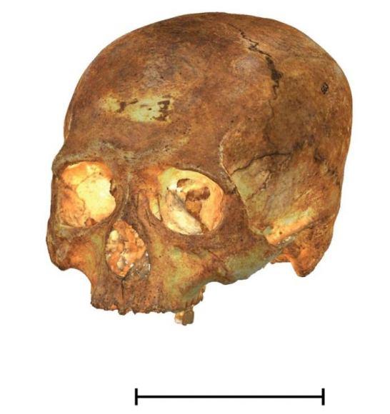 Imagen cedida por el Instituto Catalán de Paleoecologia Humana y Evolución Social (IPHES-URV). Foto: noticiasxtra.com