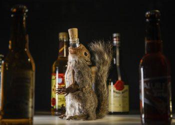 La muestra, que se inauguró este 5 de septiembre, presenta bebidas alcohólicas que podrían sonar asquerosas pero se beben en alguna parte del mundo. Foto: Andreas Ahrens / Disgusting Food Museum, vía AP.
