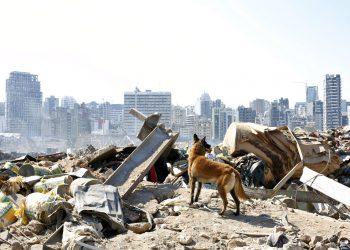 Un perro del equipo de rescate francés busca sobrevivientes en el lugar de la explosión masiva en el puerto de Beirut. Foto: Thibault Camus/AP.