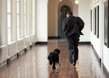 Obama corre junto a su perro Bo en el pasillo lateral a la Oficina Oval, en la Casa Blanca, durante sus años como presidente de los Estados Unidos. Foto: Pete Souza / White House / Archivo.