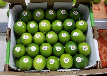 Limones producidos por un campesino cubano para su exportación a España. Foto: Cubadebate / Archivo.