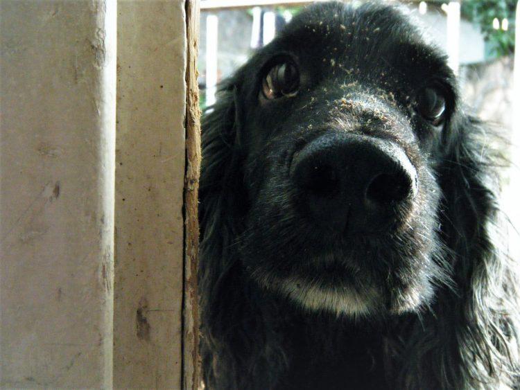 Frida después de haber destrozado una puerta. No puedo precisar el año, pero si el caos. Foto: LEZ.
