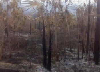 Áreas devastadas por las llamas. Foto: Gobierno Municipal de Manuel Tames/Granma.
