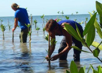 Los manglares están presentes en el 70% de las costas cubanas. Comunidades del litoral participan en una iniciativa para regenerarlos. Foto: PNUD Cuba/ news.un.org