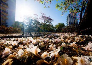 Flores en la Avenida de los Presidentes (Calle G). Foto: Otmaro Rodríguez