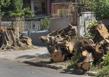 Árbol talado en las inmediaciones de 19 y 8, Vedado, denunciado por el grupo de Facebook Habana Verde. Foto: Yoel Rodríguez