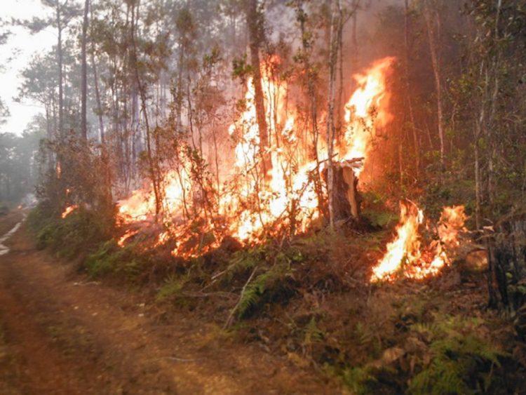 Foto de archivo de incendio forestal el oriente cubano. Foto: CITMA / venceremos.cu / Archivo.