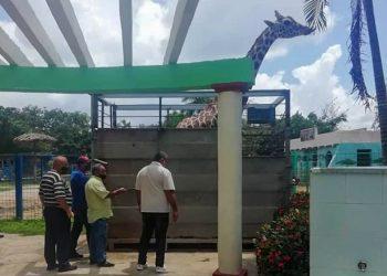 Traslado de la jirafa macho Félix desde Ciego de Ávila hasta La Habana. Foto: Empresa Cubana de Zoológicos / Facebook.