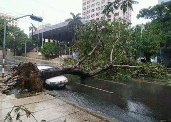 Árbol caído en 23 y N. Foto: @ldejesusreyes/ Twitter, vía:  tribuna.cu
